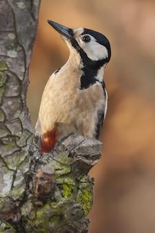 Foto de foco seletivo vertical de um pica-pau no tronco de uma árvore