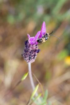 Foto de foco seletivo vertical de uma abelha em uma flor de lavanda