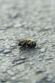 Foto de foco seletivo vertical de uma abelha morta no chão de pedra