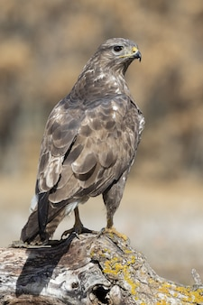 Foto de foco seletivo vertical de uma águia na natureza