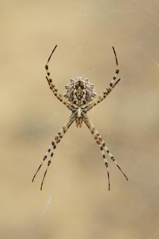 Foto de foco seletivo vertical de uma aranha de jardim amarela capturada no ar