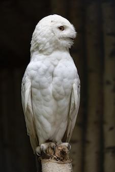 Foto de foco seletivo vertical de uma coruja branca no parque branitz, na alemanha