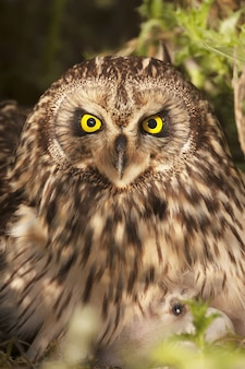 Foto de foco seletivo vertical de uma coruja campestre com olhos amarelos