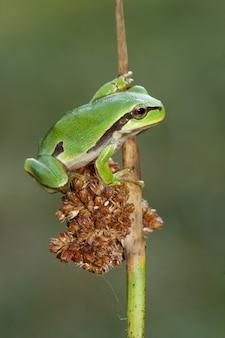 Foto de foco seletivo vertical de uma frente verde no galho fino de uma árvore