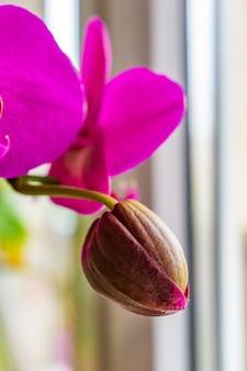 Foto de foco seletivo vertical de uma orquídea rosa não desabrochada
