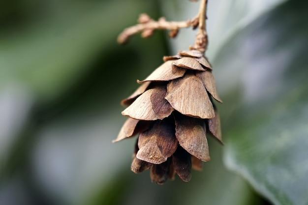 Foto de foco suave de um cone de cicuta chorando com verde