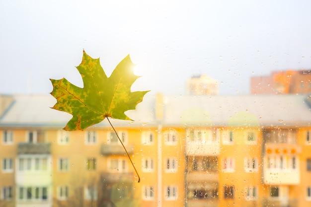 Foto de foco suave. folhas de outono reais na janela. foto sazonal. cores amarelas e verdes com textura. cartão postal de novembro. fundo transparente. bela vista da cidade.
