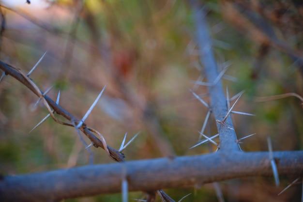 Foto de galhos de plantas com espinhos afiados