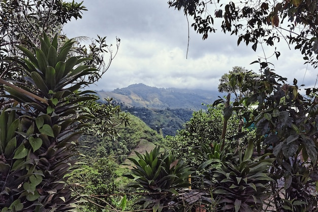 Foto de grande angular de árvores e florestas em uma montanha durante o dia