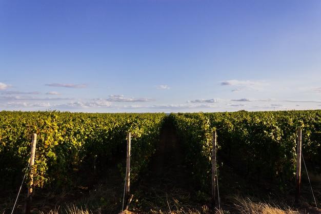 Foto de grande angular de diferentes conjuntos de plantações lado a lado