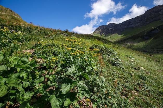 Foto de grande angular de flores silvestres no vale da montanha.
