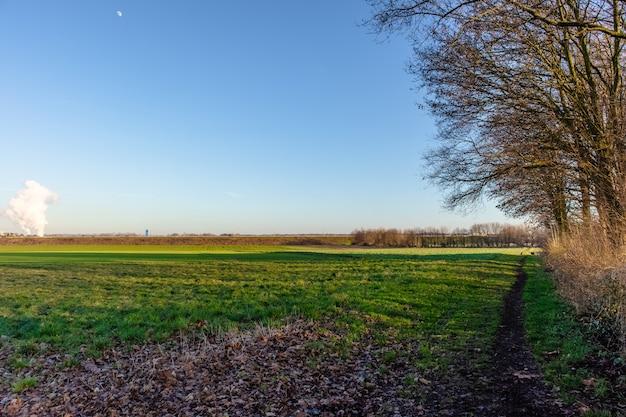 Foto de grande angular de um campo verde próximo a uma árvore