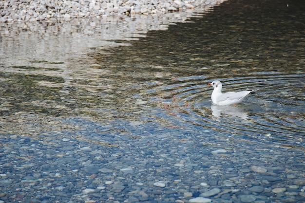 Foto de grande angular de um pássaro branco na água durante o dia