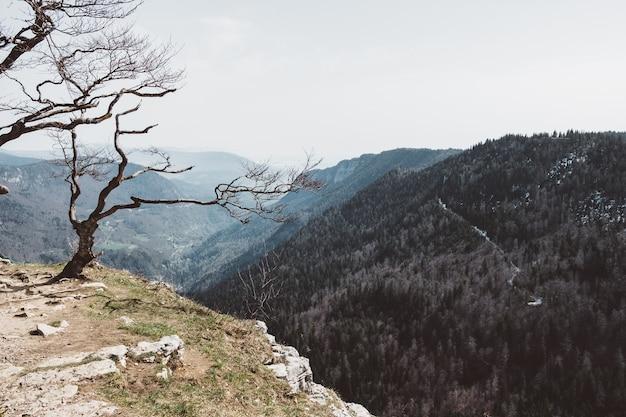 Foto de grande angular de uma árvore em uma montanha sob um céu nublado