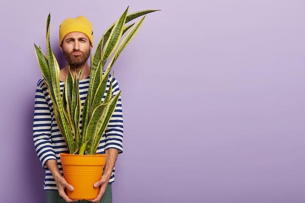 Foto de homem descontente tendo que transportar planta em vaso, segura sansevieria, tem expressão facial sombria e sombria, barba por fazer, vestido com roupas elegantes