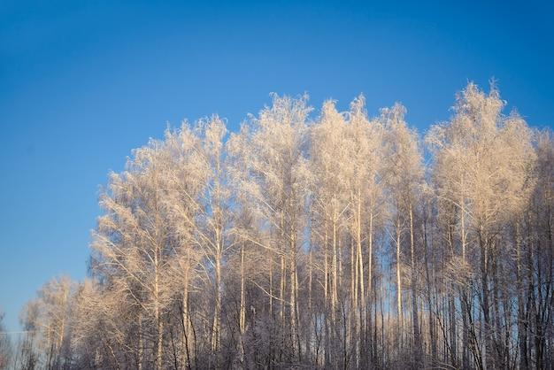 Foto de inverno com árvores cobertas de neve para cartões de natal