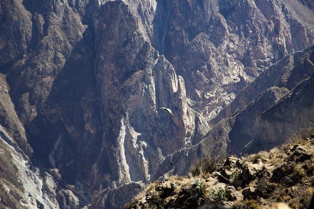 Foto de paisagem de belas montanhas rochosas com uma águia voando durante o dia