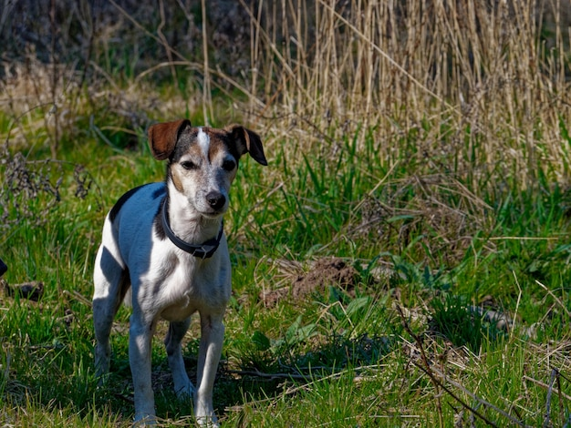 Foto de paisagem de um cachorro