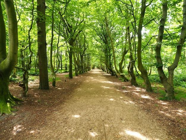 Foto de paisagem de um caminho largo com linhas verdes de árvores