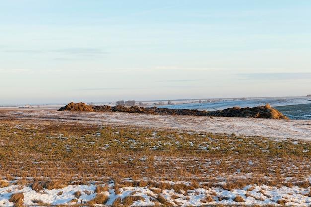 Foto de palha no campo após uma nevasca. neve branca nas plantas