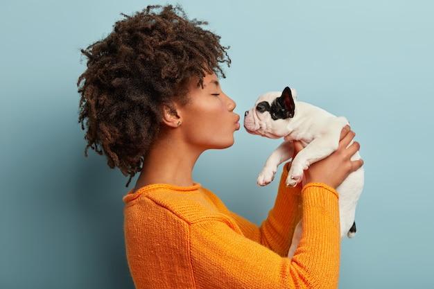 Foto de perfil de mulher de pele escura satisfeita beija um pequeno buldogue francês, expressa amor ao animal de estimação favorito, usa um macacão laranja casual, posa contra a parede azul. cachorrinho nas mãos do dono