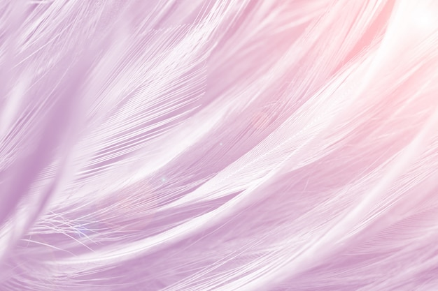 Foto de quadro completo de penas cor de rosa