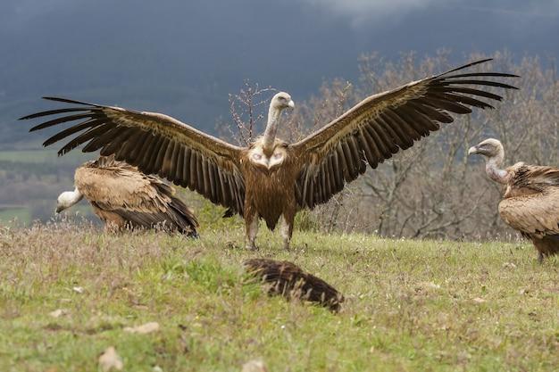 Foto de tirar o fôlego em foco seletivo de lindos abutres