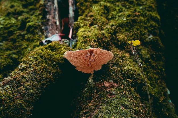 Foto de um cogumelo crescendo em um tronco coberto de musgo