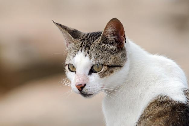 Foto de um gato adorável na rua