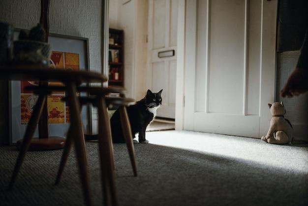 Foto de um gato doméstico preto no chão no meio de uma sala perto da porta