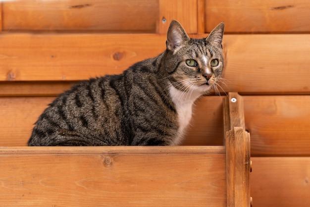 Foto de um gato malhado em um fundo de madeira