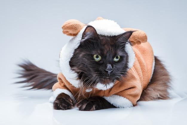 Foto de um gato preto com roupa de veado na superfície cinza vazia