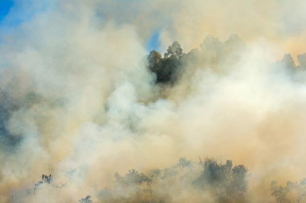 Foto de um incêndio na floresta