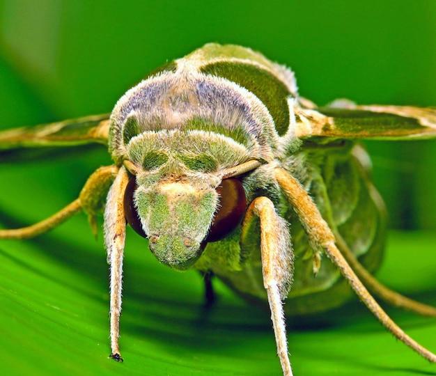 Foto de um inseto em uma superfície verde