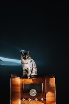 Foto de um lindo gato cinza fofo com olhos amarelos sentado em um rádio de madeira vintage