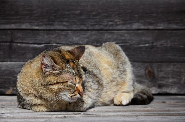 Foto, de, um, multi-colorido, gato grosso, que, preguiçosamente, coloca, ligado, um, madeira, superfície