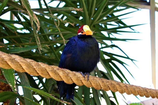 Foto de um pássaro azul sentado em uma corda grossa e algumas árvores tropicais
