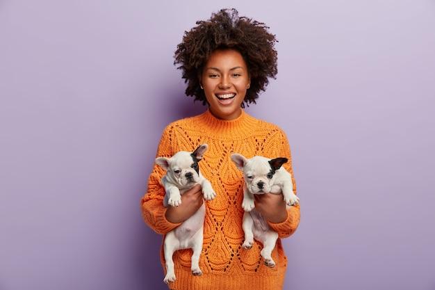 Foto de uma alegre fêmea de pele escura com cabelo encaracolado, segura dois filhotes fofos com pedigree recém-nascido, encontra um novo hospedeiro para animais de estimação, está de bom humor, usa um macacão laranja, isolado sobre a parede roxa
