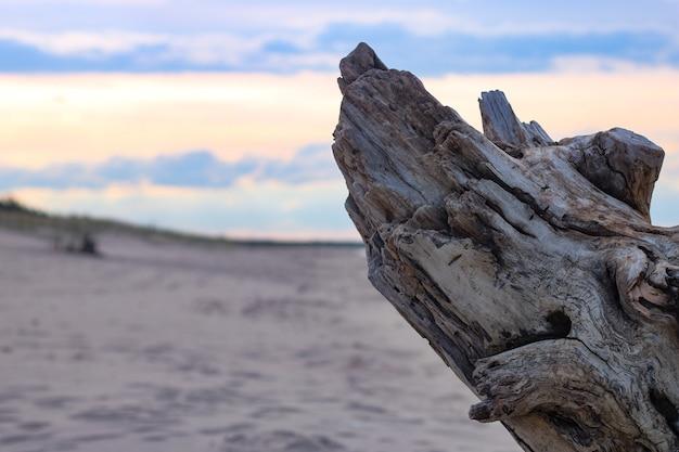 Foto de uma árvore seca na praia com vista do pôr do sol