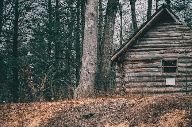 Foto de uma cabana de madeira perto de árvores em uma floresta