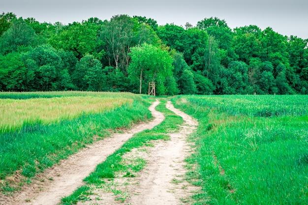 Foto de uma estrada coberta de grama e vários tipos de árvores