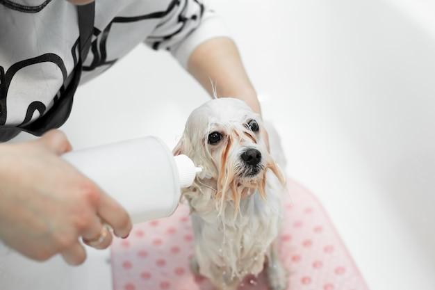 Foto de uma garota dando banho em seu cachorro no banheiro, ela derrama água do chuveiro