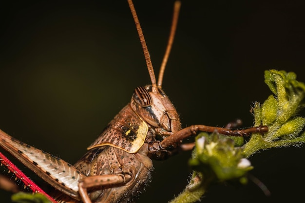 Foto de uma libélula em uma folha verde em um fundo escuro