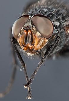 Foto de uma mosca close-up no escuro