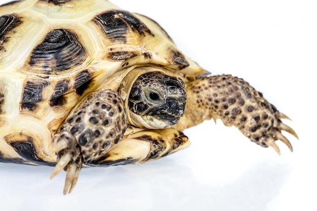 Foto de uma tartaruga