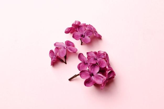 Foto de vista superior plana leiga de flores lilás da primavera. buquê de flores lilás em fundo lilás. vista de cima com espaço de cópia