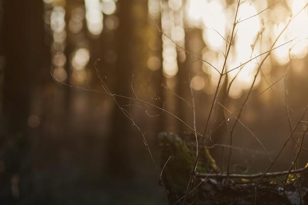 Foto desfocada e abstrata de explosão de luz entre árvores e luzes de bokeh de brilho. floresta de outono