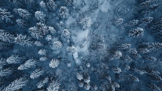 Foto do drone de árvores verdes cobertas de neve após uma nevasca de inverno na lituânia.