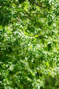 Foto do espaço verde bonito das folhas. foco seletivo