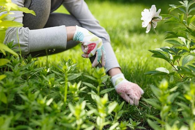 Foto do jardineiro que remove a erva daninha do solo.